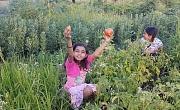 Выращивание сада может также расцвести экологически устойчивые, межкультурные, продовольственно-суверенные сообщества