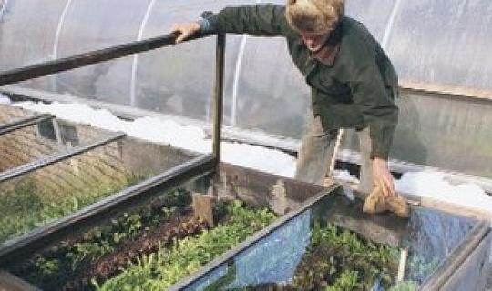 Memperluas Musim Perkebunan Sayuran