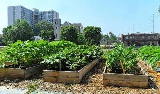 Социальные и пищевые преимущества городского хозяйства