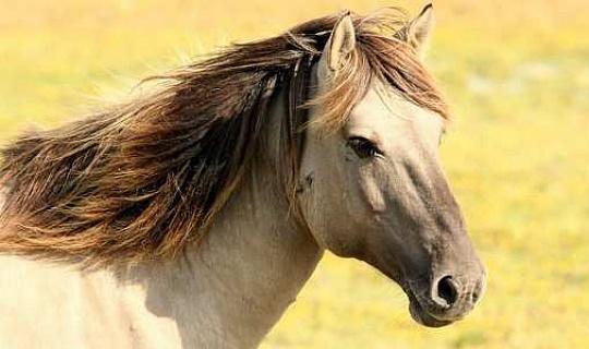 通過與馬交流了解我們自己