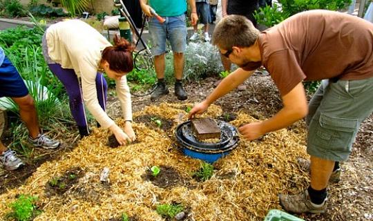 回到花園:地膜,地膜,以及更多地膜