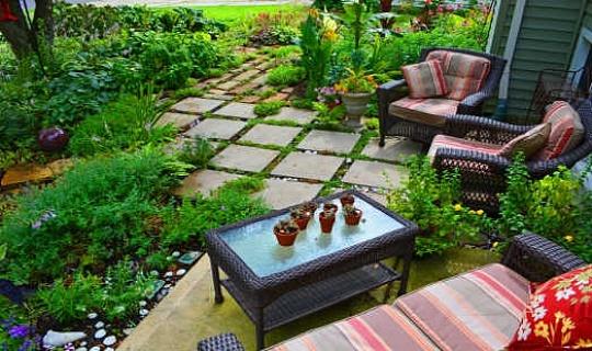 5 Geneeskrachtige kruiden die u kunt laten groeien in uw achtertuin