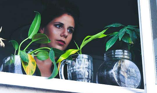 為什麼公寓居民需要室內植物