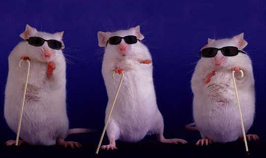 基因插入後,盲小鼠會恢復視力