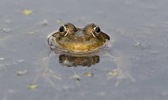 Comment rendre votre grenouille de jardin amicale