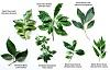هذه النباتات الطبية تضع الفرامل على نمو السرطان