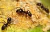 6 fantastiska fakta du behöver veta om myror