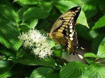 Wie Insectageddon mit einem Garten einheimischer Pflanzen zu bekämpfen