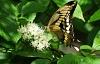 Hur man kämpar Insectageddon med en trädgård av infödda växter