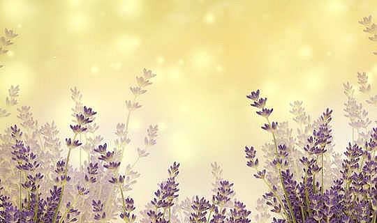 Minyak Essential sebagai Aromatics, dalam Penyembuhan, dan untuk Kegembiraan