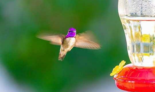 Вот несколько советов, как правильно кормить диких птиц