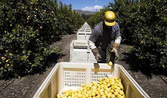 كيف يهدد الفيروس التاجي عمال المزارع الموسميين في قلب إمدادات الغذاء الأمريكية