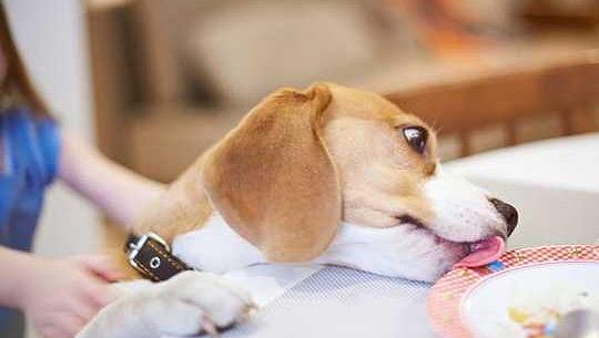 8 أشياء نفعلها بالفعل تخلط بين كلابنا