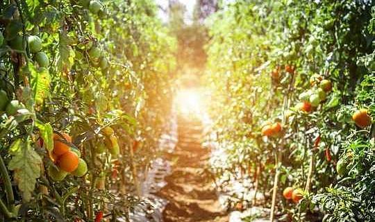 Mengapa China Muncul Sebagai Pemimpin Dalam Pertanian Mampan dan Organik