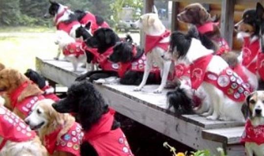 狗有所作為:西莉亞和童子軍