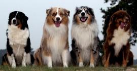 Djur lär oss andlighet och höj vår förmåga att älska och uppleva glädje