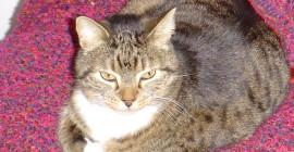 Katter och du: Katternas hemliga helande kraft