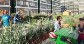 วิธีการทำนาในเมืองผลิตได้มากกว่าอาหาร