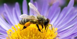 Они смотрят на вас? Пчелы и осы могут распознать ваше лицо