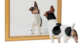 كيف شخصية الكلب الخاص بك يمكن أن تتغير مع مرور الوقت