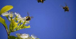 Что умные пчелы могут научить людей о коллективном интеллекте