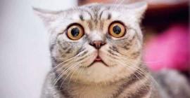 Кошачьи морды жестоки или полезны?