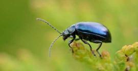 Varför vi borde lära oss att älska alla insekter