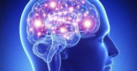 Din hjärna, hälsosamma fetter och vikten av att passa in i dina gener