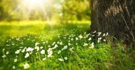 Ansluta till naturen och upptäcka växter som talar