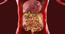 Здоровый микробиом создает сильную иммунную систему, которая может помочь победить Covid-19