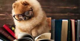 Как узнать, гений ли ваша собака