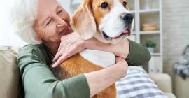 Влияние домашних животных на наше психическое здоровье и благополучие