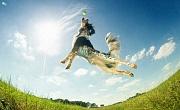 Adakah Anjing Adakah Really Have Feelings?