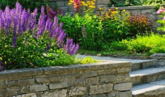 قدرتی باغبانی کے لئے آبادی کے لئے