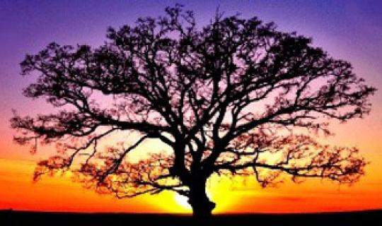 Ho'oponopo: संतुलन बहाल करने से हीलिंग