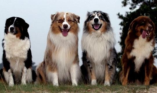पशु हमें आध्यात्मिकता को सिखाते हैं और प्यार और खुशी का अनुभव करने की हमारी क्षमता को बढ़ाते हैं