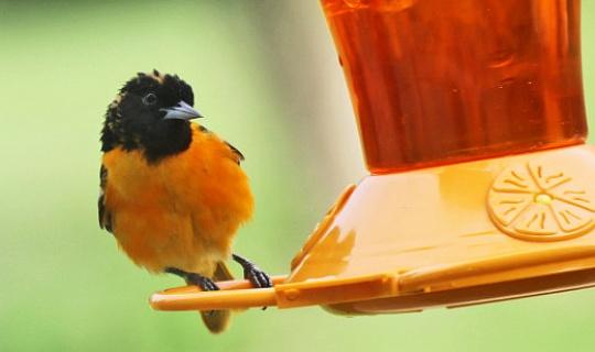 ایک پنکھ کے پرندوں کے ساتھ مل کر کیسے رہیں