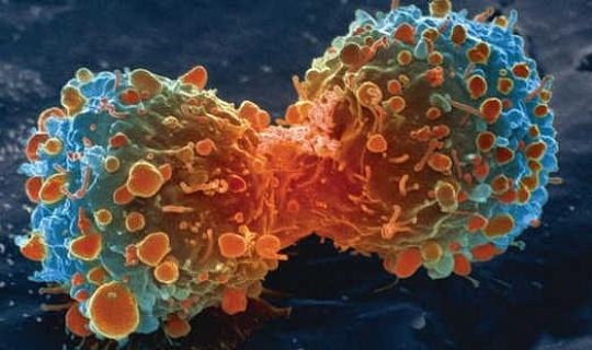 कैंसर कोशिकाओं को वे क्या चाहते हैं पाने के लिए गंदे खेलते हैं