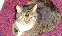 Katte en jou: Die geheime helende kragte van katte