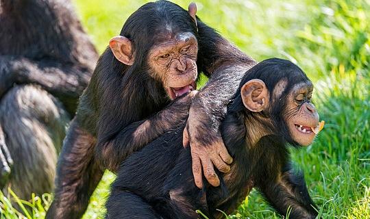 再生ハードと作業ハード:動物のガイドは良い生活に