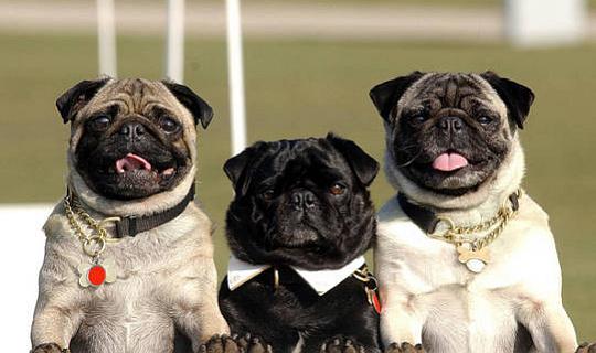 Hoekom Hierdie Dog Show Is Meer As 'n Dogter Beauty Pageant