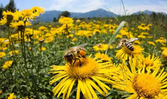 Medan vissa bin är arbetare och andra födda att vara fria