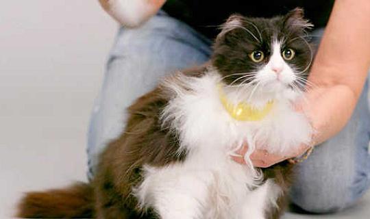 Kunde Mysteriet av Meow faktiskt lösas av en ny pratande katt halsband?