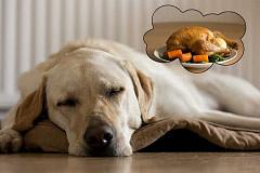 Los perros tienen 3X Más BPA después de comer alimentos enlatados