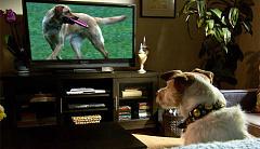Watter honde sien wanneer hulle televisie kyk