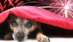 आतिशबाजी से कैसे कुत्तों को वास्तव में प्रभावित होता है