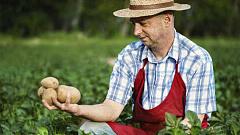 Kan du överleva genom att äta idela potatis?