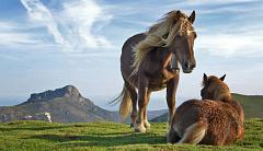 Lo que los caballos pueden enseñarnos