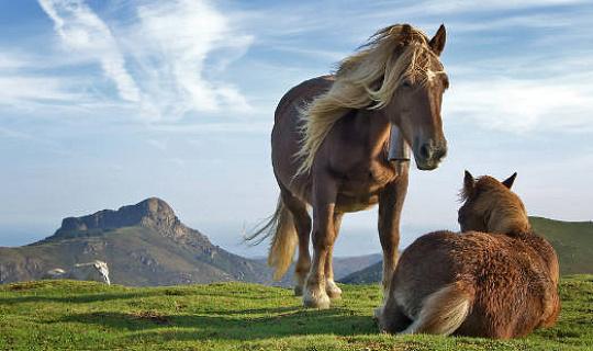 क्या घोड़े हमें सिखा सकते हैं