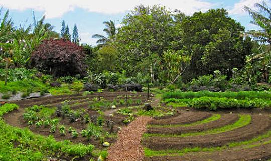 Uma revolução disfarçada de jardinagem orgânica